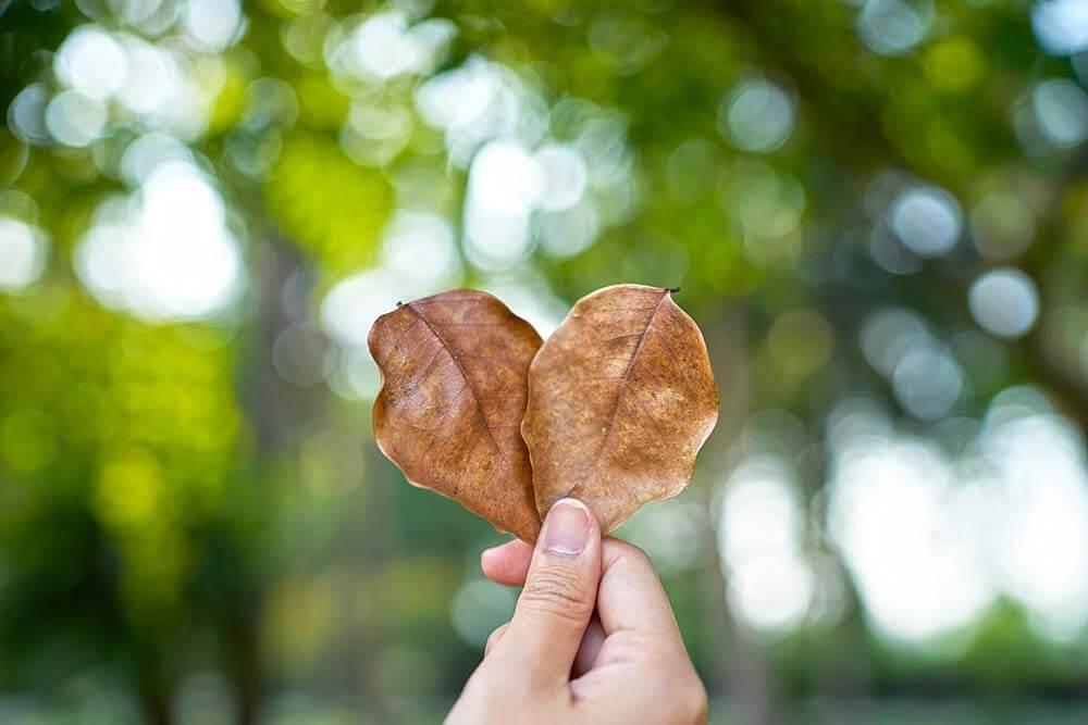 """הצעת פעילות בנושא """"הלב"""""""